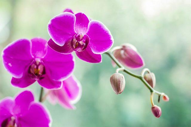 Những Loài Hoa Màu Tím Được Yêu Thích Nhất Tại Việt Nam
