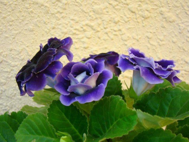 18 Loài Hoa Màu Tím đẹp được Nhiều Người Yêu Thích Nhất