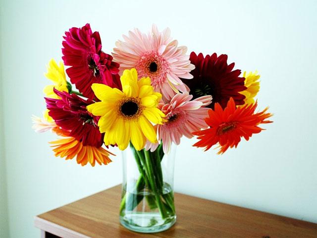 Những loại hoa nên để trong nhà ngày tết - hoa đồng tiền