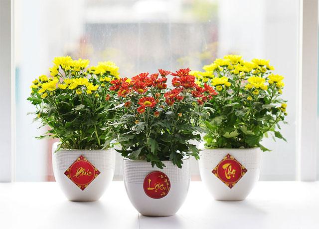 Những loại hoa nên để trong nhà ngày tết - hoa cúc vàng