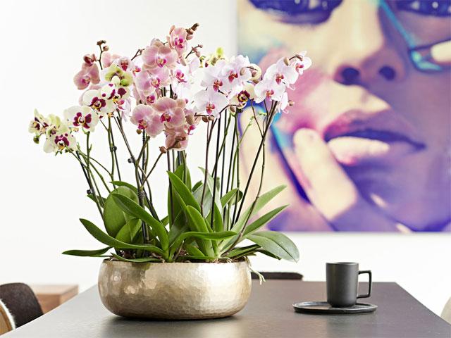 Những loại hoa nên để trong nhà ngày tết - hoa lan